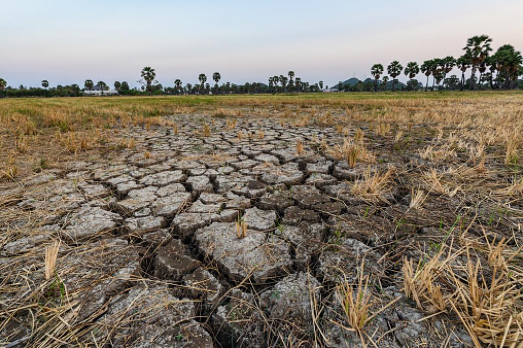 Agriculture bore a fourth of the total losses caused by climate change-related disasters. Photo: Getty Images