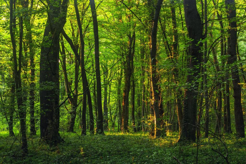 A forest. Photo: Getty Images