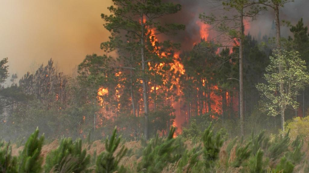 Amazon, the lungs of the planet, is ravaged by deforestation and wildfires, which is a significant driver of desertification. Photo: Getty Images