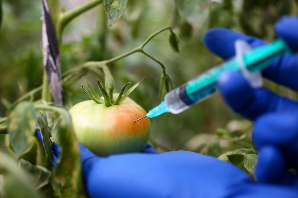 Many times farmers harvest fruits and vegetables much before they get ripe and traders then ripen them artificially at the destination using certain chemicals. Photo: Getty Images