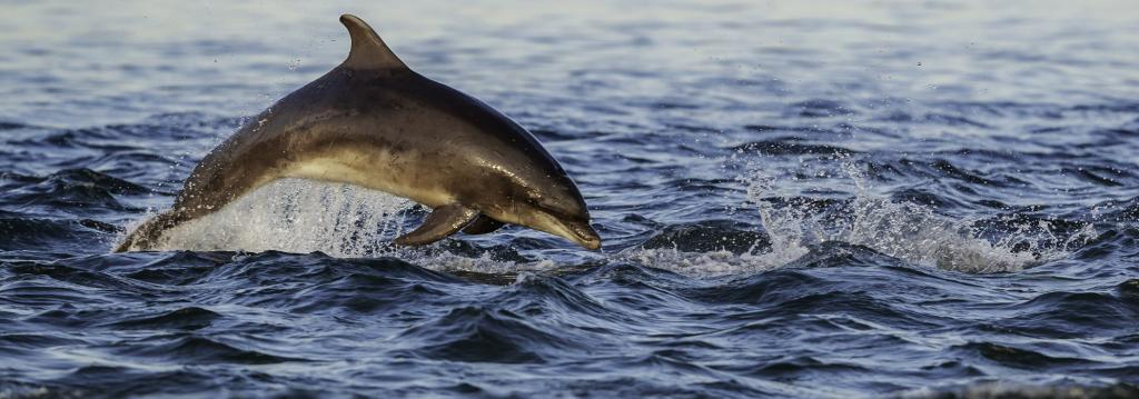 A bottlenose dolphin. Photo: Getty Images