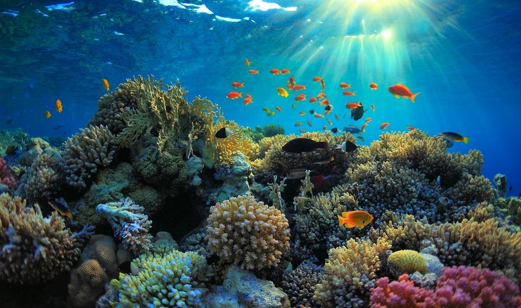 Current levels of global warming can kill all the coral reefs in the world by 2070. Curbing global carbon emissions up to 45 per cent of 2010 levels by 2030 can help them survive, according to a study published in the Nature journal. Photo: Getty Images