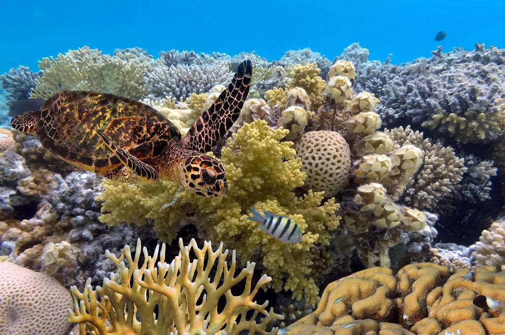 These actions would extend beyond saving the coral reefs. It will also help reduce emissions, capture carbon, protect other ecosystems by safeguarding coastal catchment areas, curb agricultural runoff onto coastal reefs and enhance people's livelihoods and food security, said scientists from Australian Research Council Centre of Excellence for Coral Reef Studies. Photo: Getty Images