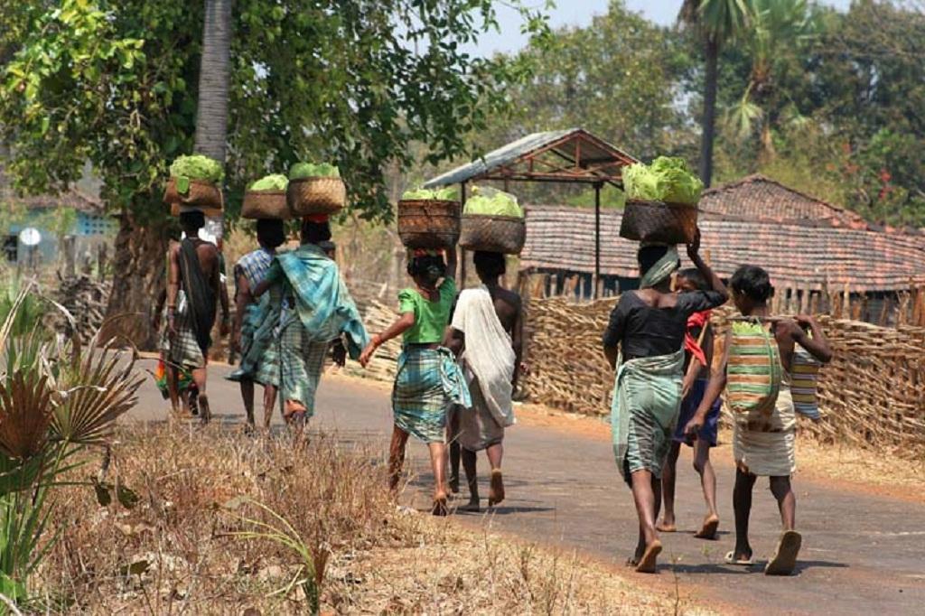 तेंदूपत्ता इकट्ठा कर ले जाती आदिवासी महिलाएं। फोटो: अवधेश मलिक