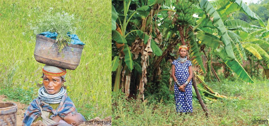 बोंडा समुदाय देश के 75 वर्गीकृत विशेष रूप से कमजोर आदिवासी समूहों (पीवीटीजी) में से एक है। इस समुदाय के किसानों के लिए, डांगर चास नाम की कृषि प्रथा (उच्चभूमि की खेती) पीढ़ियों से खाद्य सुरक्षा सुनिश्चित करती आ रही है