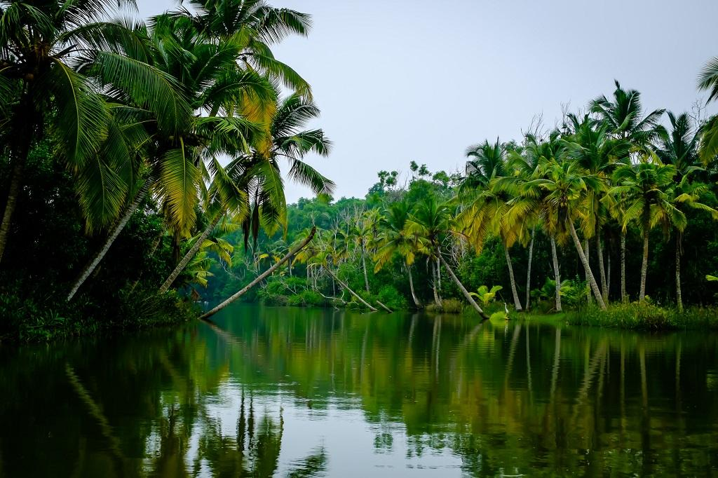 Forest-PLUS 2.0 comprises pilot project in three landscapes – Gaya in Bihar, Thiruvananthapuram in Kerala and Medak in Telangana. Photo: Getty Images