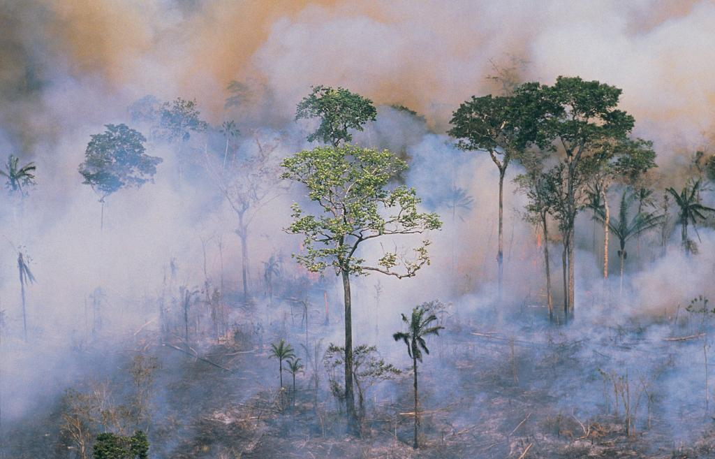 To date, the Brazilian army has arrested more than 60 people for setting fires. The Ministry of Defense has announced that it has applied $36.3 million in fines against burning and deforestation. Here, firefighters spray water on a burning patch of forest. Photo: Getty Images