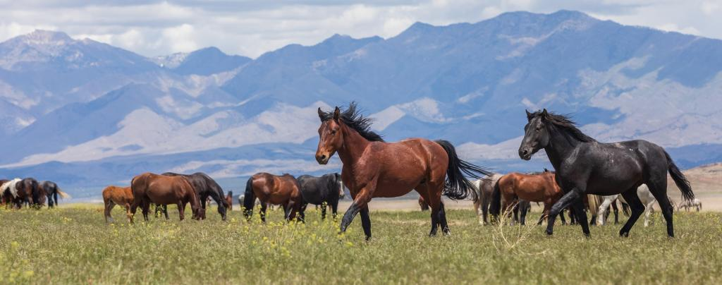 Wild horses in Utah. Photo: Getty Images