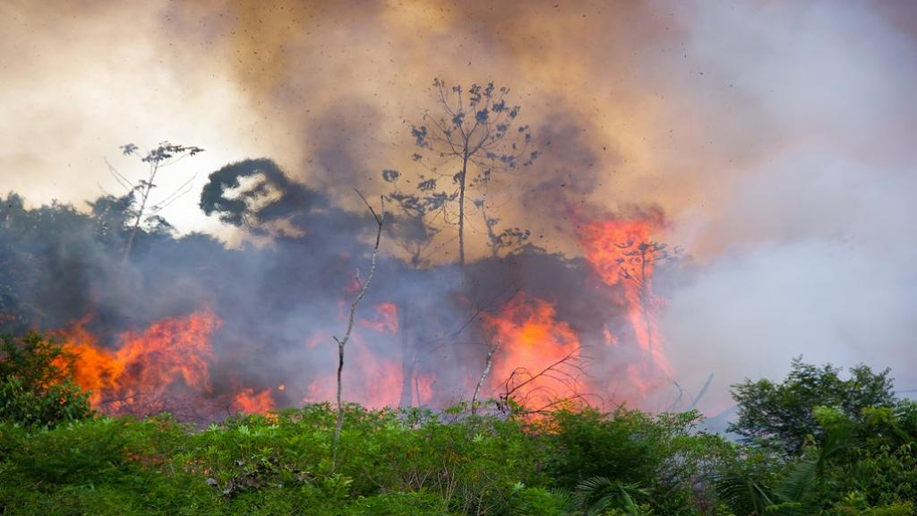 Amazon fires. Photo: Getty Images