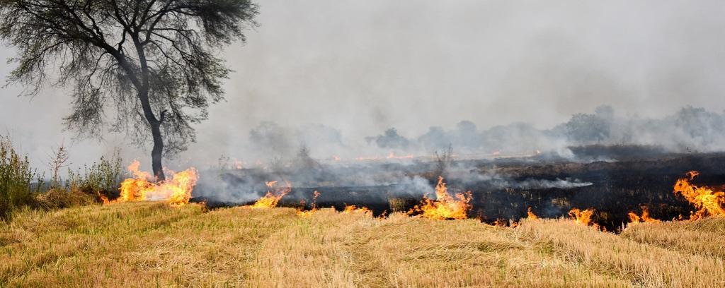 Stubble burning. Photo: Getty Images