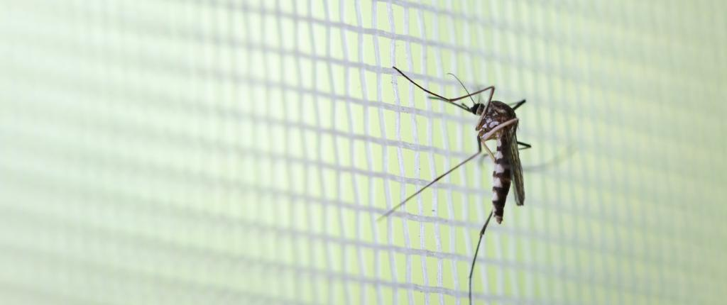 Most dengue cases were from areas that witnessed heavy water logging in Patna. Photo: Getty Images