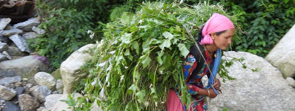 A Himachali woman with a bundle of fodder. Photo: Wikimedia Commons