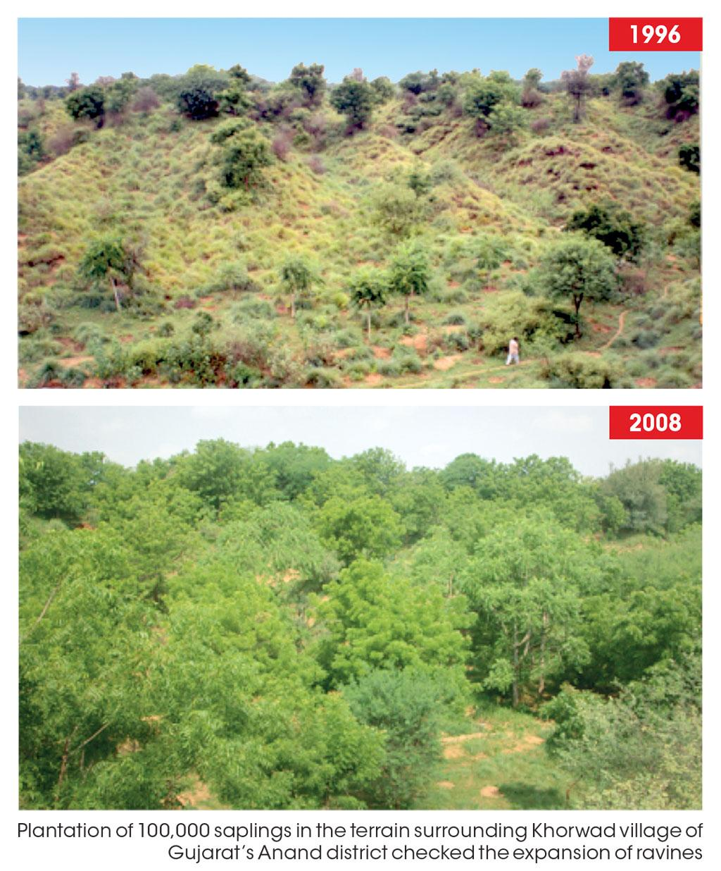 Plantation of 100,000 saplings in the terrain surrounding Khorwad village of 