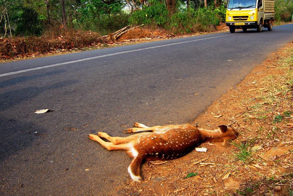 केरल के वायनाड को कर्नाटक से जोड़ने वाले मनंथावड़ी-कुट्टा राजमार्ग पर आठ महीनों में 2,426 जीव मारे गए हैं। फोटो: धनीष भास्कर
