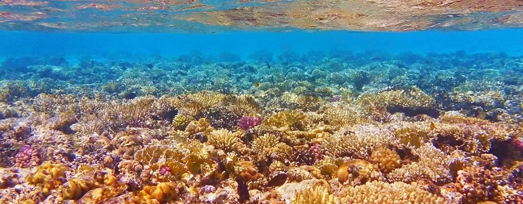 Great Barrier Reef Authority Sees Vibrant Future Ahead