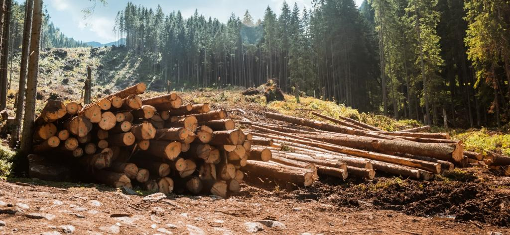Deforestation. Photo: Getty Images