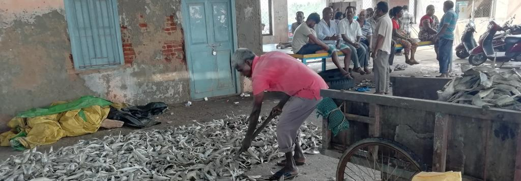 A worker clearing the dried up fish at the Kakinada fishing harbour. Photo: G Ram Mohan
