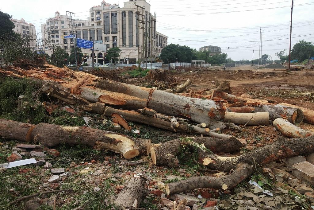 भोपाल में काटे जा रहे पेड़। फोटो: मनीष चंद्र मिश्रा