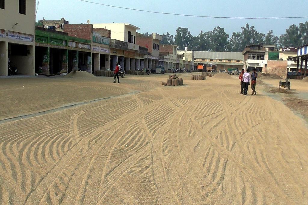 हरियाणा के अंबाला स्थित नारायणगढ़ मंडी में बिखरा धान। फोटो: मलिक असगर हाशमी