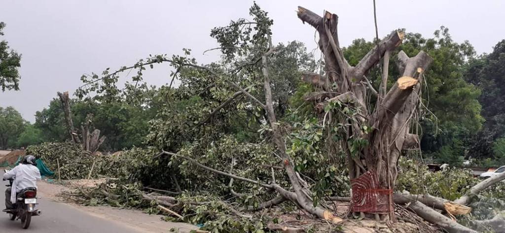 पटना में आर ब्लॉक चौराहा के पास निर्माण कार्य के लिए की गई पेड़ों की कटाई। फोटो: पुष्यमित्र