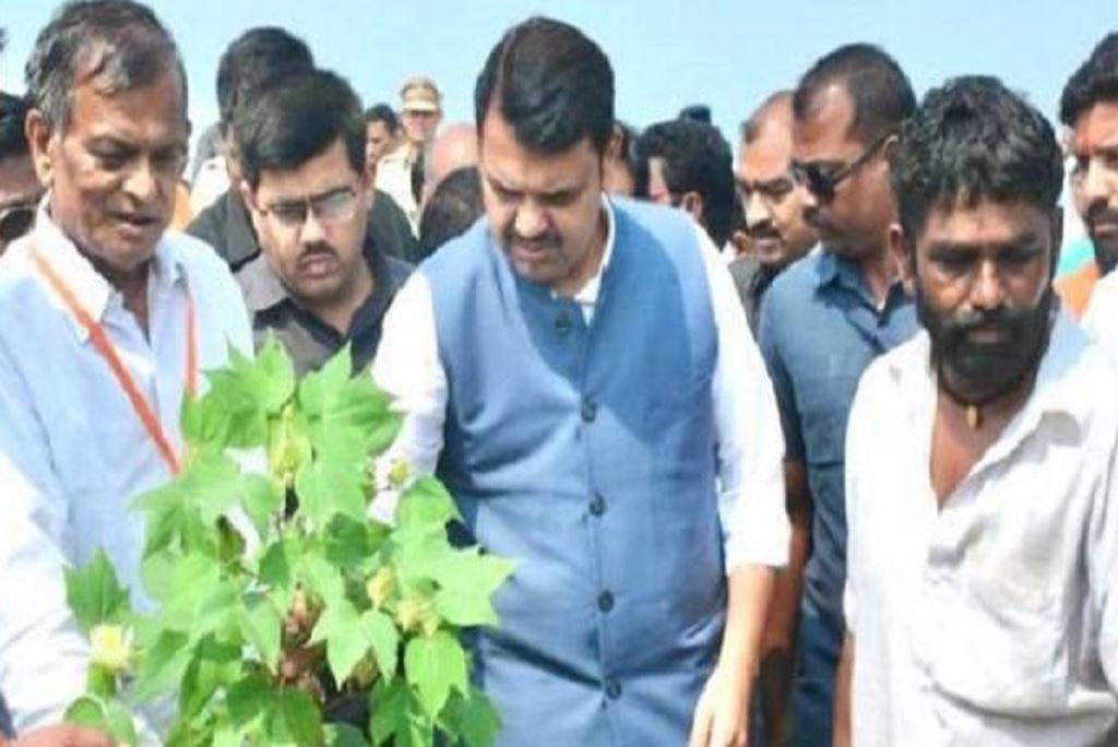 महाराष्ट्र के मुख्यमंत्री देवेंद्र फणनवीस बर्बाद फसल को देखते हुए। फोटो: अश्विन अघोर