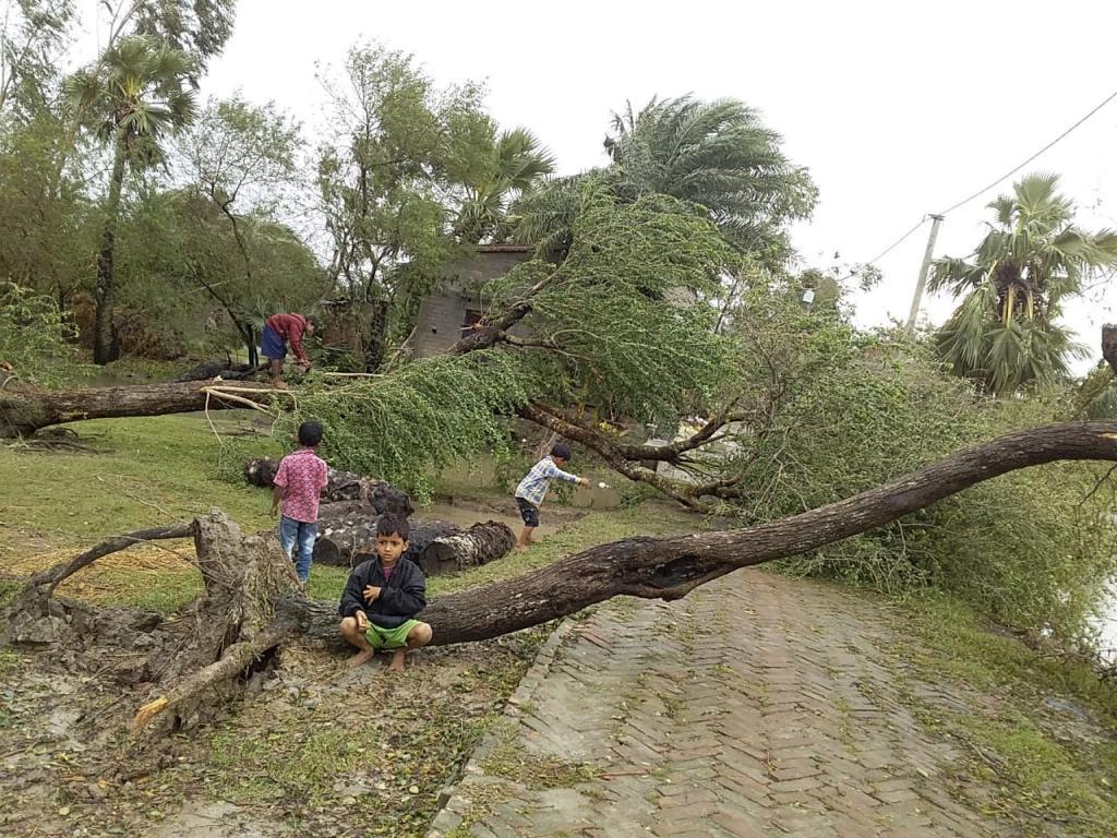 Bulbul in Bengal. Photo: Sudarshana Chakrabarty