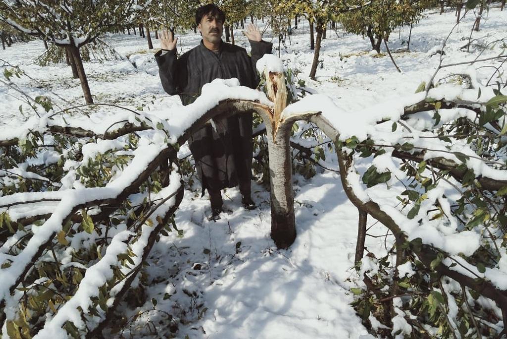 कश्मीर में बर्फबारी से टूटे सेब के पेड़ दिखाता किसान।