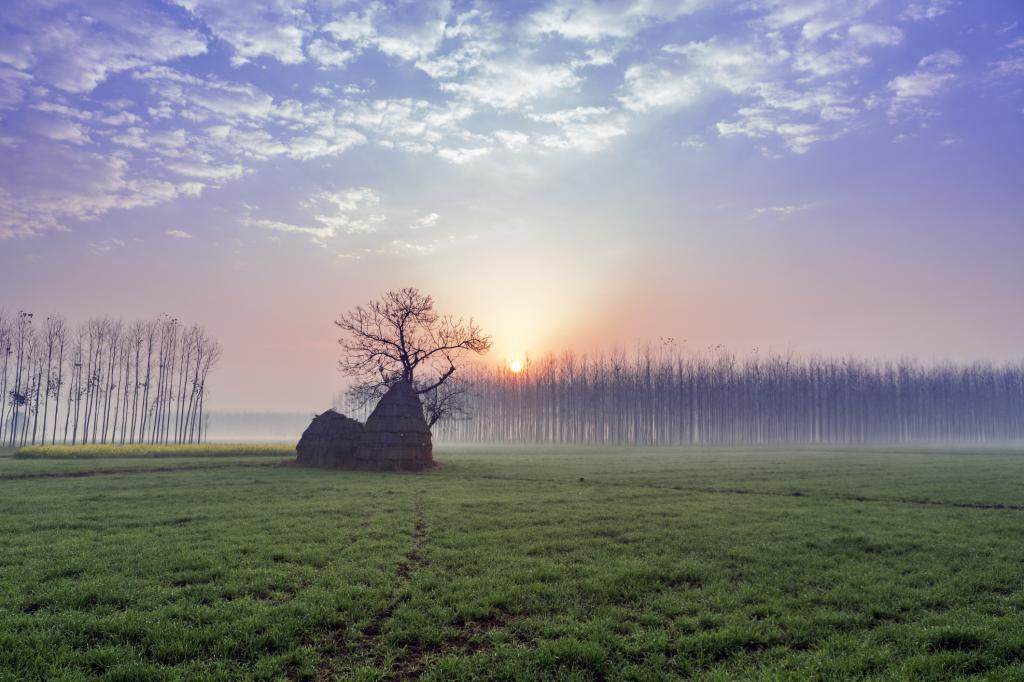 Punjab wheat field. Photo: Getty Images