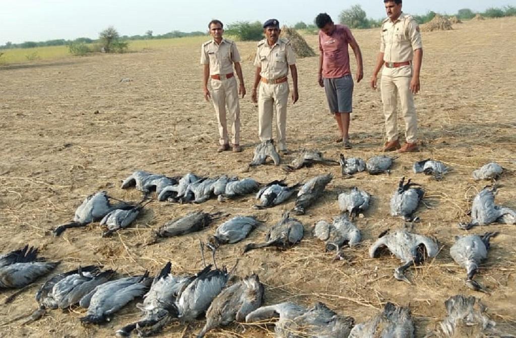 गुजरात के कच्छ इलाके में 60 प्रवासी पक्षियों की मौत हो गई। फोटो: माधव शर्मा