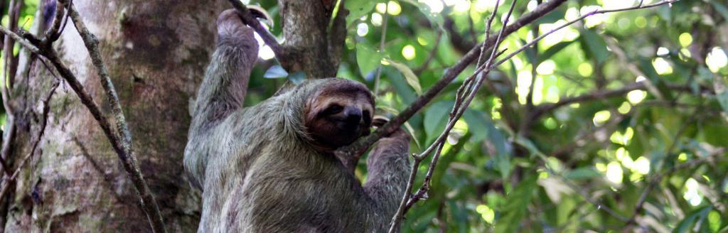 Global Eco Watch: Major ecological happenings of the week (November 13 – 17)