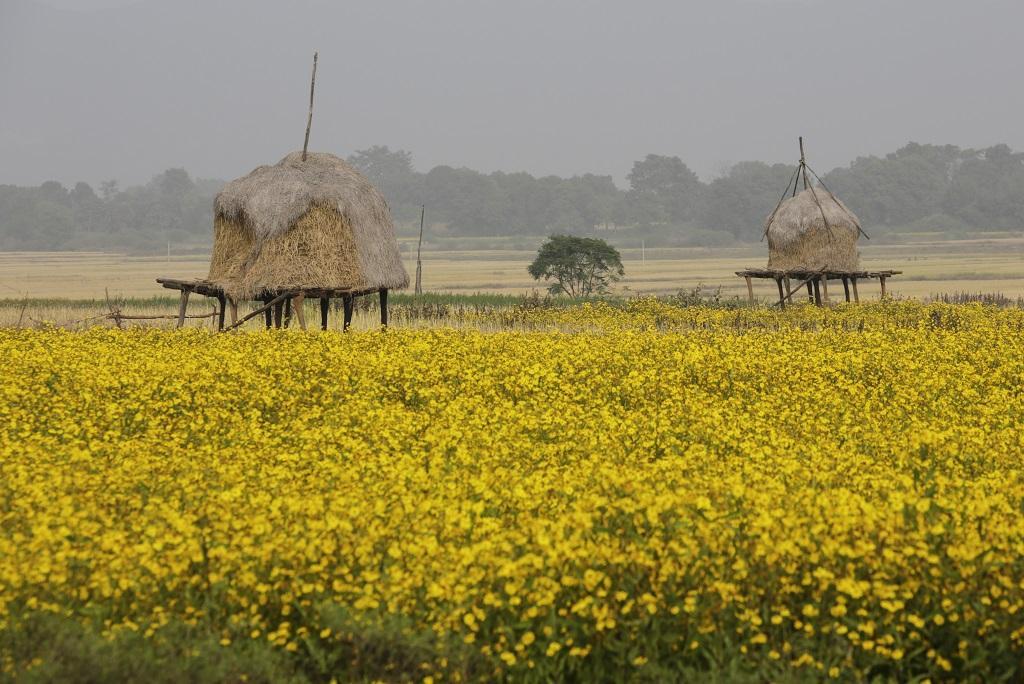 Photo: Vikas Choudhary