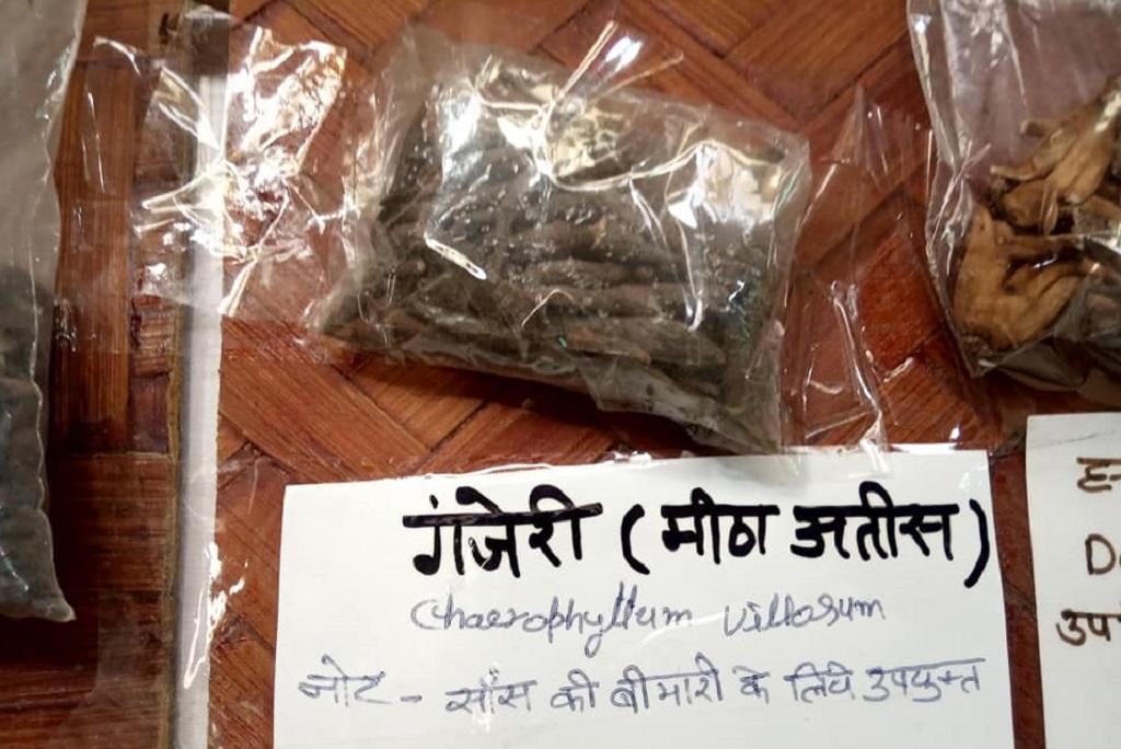 जलवायु परिवर्तन की वजह से हिमालयी जड़ी बूटी के अस्तित्व पर खतरा मंडरा रहा है। फोटो: वर्षा सिंह