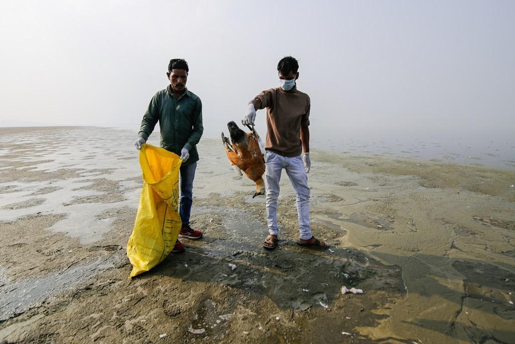राजस्थान की सांभर झील में प्रवासी पक्षियों की मौत जारी है, लेकिन झील धीरे-धीरे अपनी मौत मर रही है। फोटो: विकास चौधरी