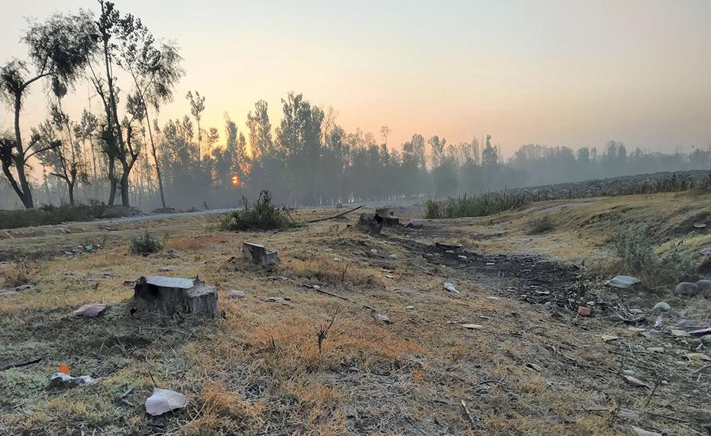 Stumps of recently felled walnut trees in Anantnag district of Kashmir. High-ranking officials admit that police personnel are hand in glove with the timber mafia for making such large-scale felling possible