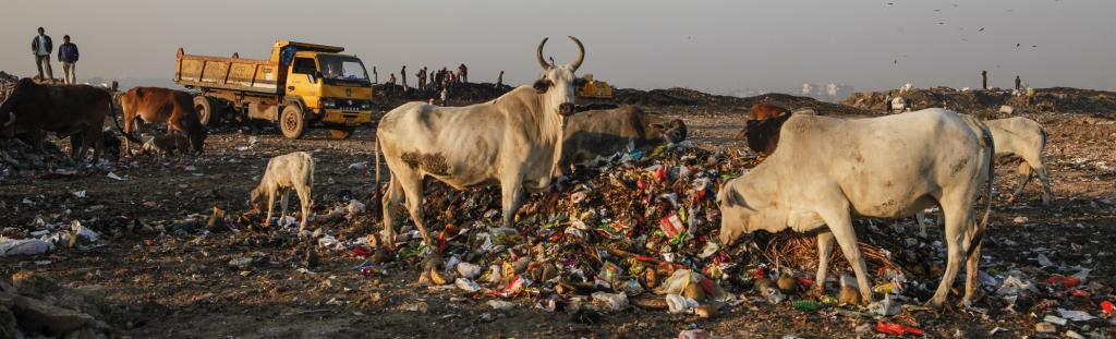 40 per cent of plastic waste generated in India remains littered on the streets. Photo: Chinky Shukla/CSE