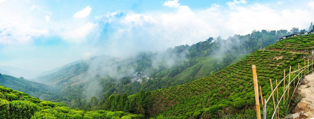 Rising mean temperature during summers in Sikkim has impacted tree growth Photo: Getty Images