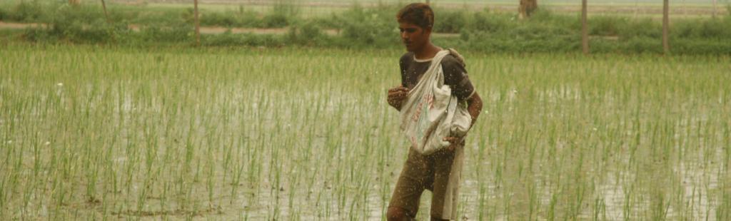 Severe urea shortage leads to row between Madhya Pradesh, Centre