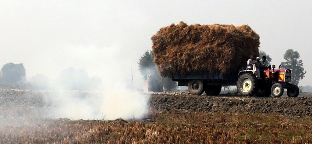 Stubble burning in Haryana. Photo: Vikas Choudhary