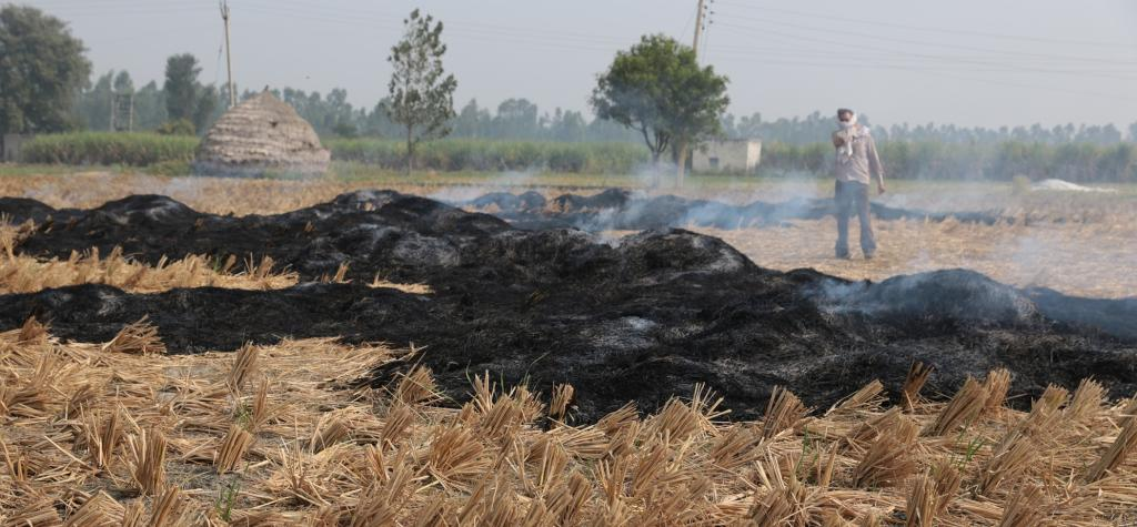 Stubble burning. Photo: Vikas Choudhary / CSE