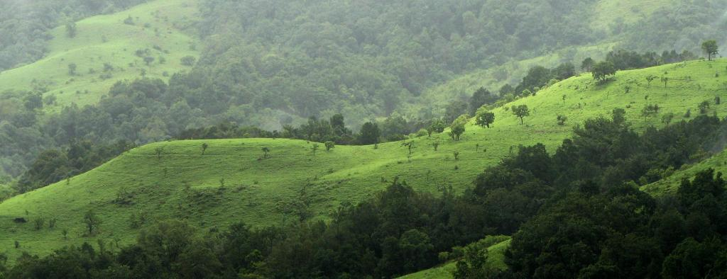 India's forest cover goes up by nearly 3% this decade; but all is not well