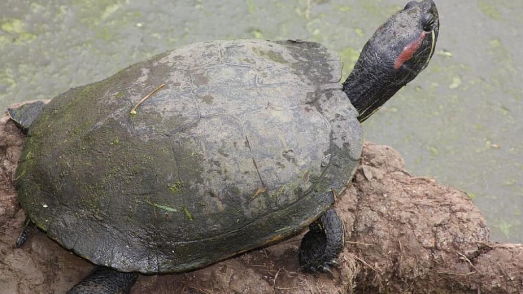 A turtle. Photo: https://www.piqsels.com/