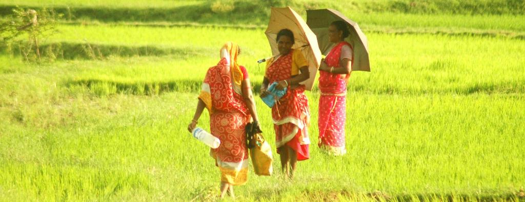 Women at paddy fields in Pakur. Photo: Agnimirh basu