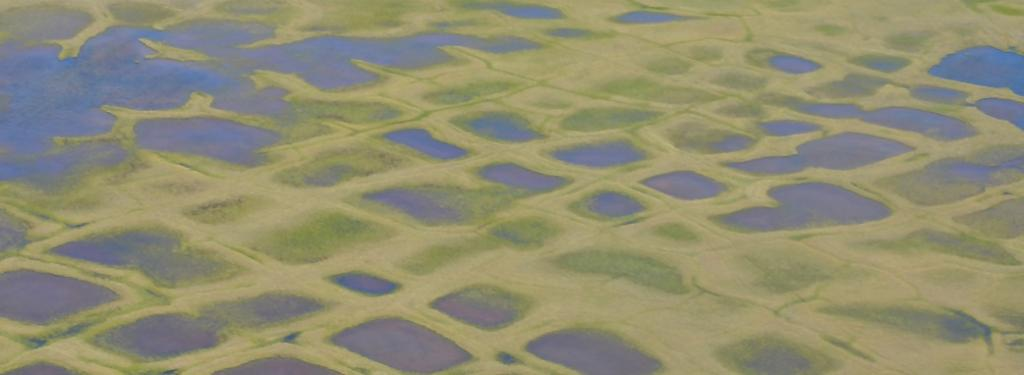 Thermokarst ponds in Alaska formed due to thawing permafrost. Photo: Nasa