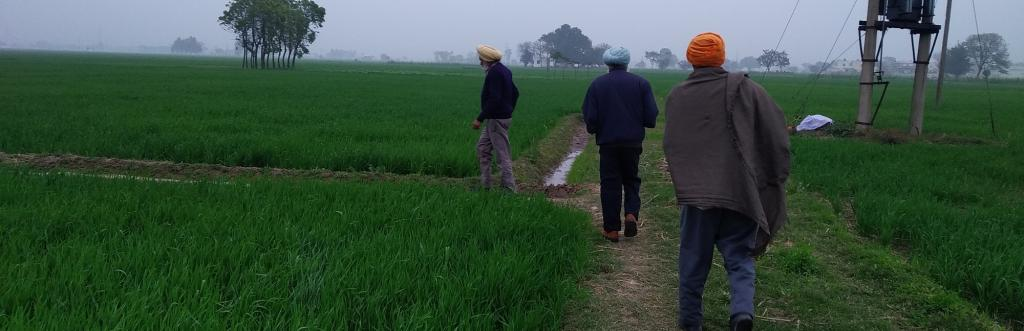Punjab commons. Photo: Jitendra / Down To Earth