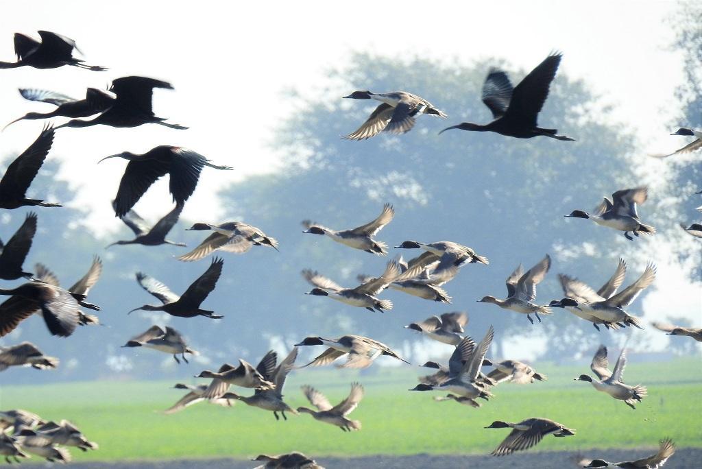 भोपाल के रामसर साइट बड़े तालाब के आसपास पक्षियों की गणना की गई। फोटो: मनीष मिश्र