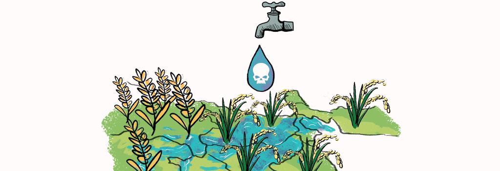 Arsenic contamination. Illustration: Ritika Bohra