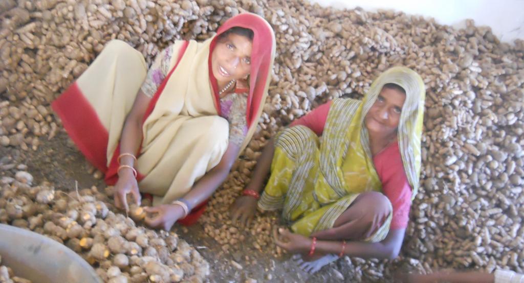 Two women in Dungarpur processing turmeric