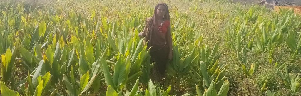 A farmer in her turmeric field in Dugarpur district, South Rajasthan