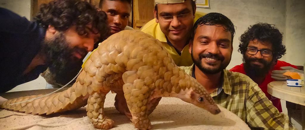 A team of researchers observing the world's first-ever radio-tagged Indian Pangolin. Photo: WCT / MP Forest Department