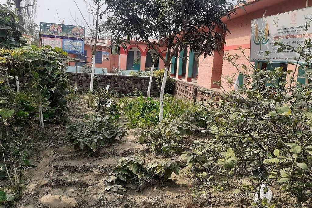 बिहार के पूर्णिया जिले के कसबा प्रखंड में स्थित आदर्श मध्य विद्यालयकी पोषण वाटिका जहांं बच्चों को खिलाने के लिए हरी सब्जियां उगायी जाती हैं। फोटो: पुष्य मित्र
